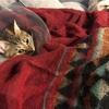 【猫画像】平和な猫たちがいるから書いていくよ
