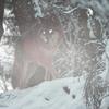 虎の光る眼