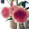 ソニアリキエル 続く猛暑日!秋はどこに? バテたバラに特別メニュー