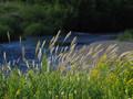 夏の終わりに茨戸川緑地までサイクリング