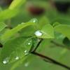 雨の日の花たちを