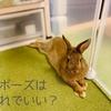 ウサギ記録アプリなら「うさ飼い日記」が簡単カワイイ♪