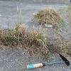 コンクリート目地の雑草