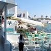 ギリシャ旅行記3  ミコノス島  タウン散策とlittle veniceで海目の前ディナー♪