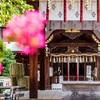 京都・洛中 - 御霊神社の百日紅