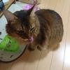 猫はカニを食べても大丈夫なのか? もちろん、父さんはカニが大好きです!!