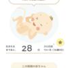 【36w】臨月突入したよ!