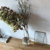 雑司ヶ谷の温かみに溢れたカフェ  『うぐいすと穀雨』