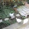 おだやかな 朝の庭と、ハッピーソング