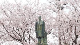 【愛知県・津島市】カメラ片手にお花見散策!桜舞い散る天王川公園に行ってきました