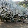 いよいよ春本番。楽しい季節がやってきた。