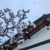 暖かくなったり寒くなったり、雨が降ったり雪が降ったり、3月の信州らしい気候が続いています。