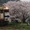 日田彦山線 呼野国道踏切の桜