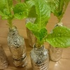 レタスは毎朝窓辺で収穫する