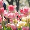 春ソングといえば何を思い浮かべる?