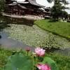 京都 宇治市 平等院鳳凰堂付近にもスタバあり