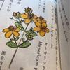 ピリカメル草樂図譜
