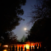 月の神様、月読尊の世界観を占ってみる 🌑 🌓 🌔 🌕