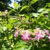 「自然は宇宙」を体現した花々【エッセイ】