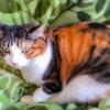 【愛猫日記】毎日アンヌさん#144