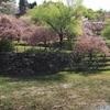 宇治市植物公園「八重桜」2021