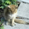 皮膚病で目を開けられなかった野良猫、治療のすえ美猫に大変身を遂げる