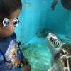 2020年仙台うみの杜水族館🐡今年もやってるプレミアムナイトアクアリウムに行ってきた!!