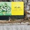 ゴッホ展@兵庫県立美術館|感想・混雑状況・グッズレポート