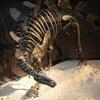 恐竜2009−砂漠の奇跡