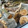モチの木の薪