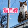 猫目線「広島 CAT STREET VIEW」癒されながら街巡り