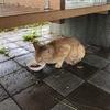 雨の七夕★*。*お外のネコさんたち