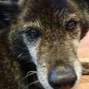 【タロハルブログ】 保護犬・保護猫と暮らす