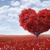 相手に好意を伝えることが恋愛の始まり。