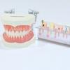 ips細胞で歯の再生は出来る?実用化はいつから?わかりやすく説明!