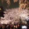 六義園で枝垂れ桜を見てきました