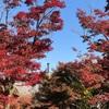 ライルランド地対空ガーデン〜紅葉の訪れの巻