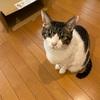 猫の爪を切りました!猫の性格によって切り方も変わる~我が家の場合