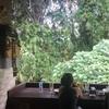 なぜバリ島が好きか?って🤫バリ島の魅力