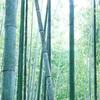 京都 嵐山ー野宮神社と竹林