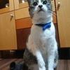 猫が引き戸を開けられるようになるのは、時間の問題
