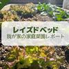 【2021年5月】レイズドベッドによる家庭菜園レポート