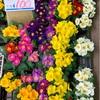 花の苗色を並べて春めける(あ)