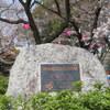 【行った】名古屋市の鶴舞公園の桜の見どころ、屋台、駐車場情報なども