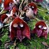 夏だ!ホラーだ!食虫植物だ!夏を涼やかにする妖怪じみた食虫植物たち8種