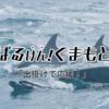 【熊本地震支援】各地で使えるお得なクーポン!出掛けて応援!
