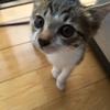 女子力たっぷり子猫観察