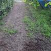南畝の除草(続き)