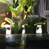観葉植物で癒される