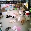 2017年8月12日 ライブアニメーション 14:00頃